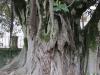 Коимбра. Ботанический сад Университета