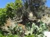 Олива и кактус