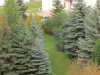 Спасо-Яковлевский Димитриев монастырь